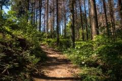 Bergischer-Panoramasteig-–-Etappe-1-10-von-21