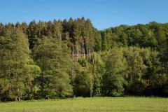 Bergischer-Panoramasteig-–-Etappe-1-20-von-21