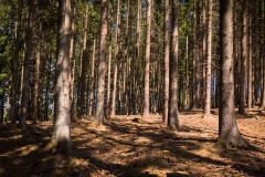 Bergischer-Panoramasteig-–-Etappe-1-3-von-21