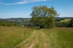 Bergischer-Panoramasteig-–-Etappe-1-7-von-21