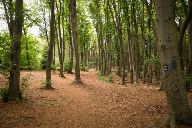 Bergischer Panoramasteig – Etappe 3   Wald bei Biesfeld