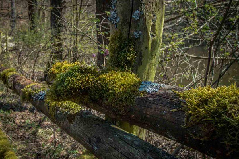 Eifelspur - Wildnispfad